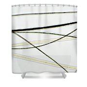 Dog Hair Shower Curtain