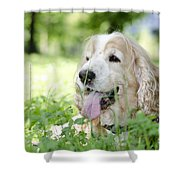 Dog On The Green Grass Shower Curtain