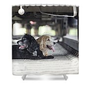 Dogs Lying Under A Train Wagon Shower Curtain