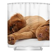 Dogue De Bordeaux And Cavalier King Shower Curtain