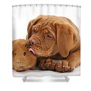 Dogue De Bordeaux Puppy With Red Guinea Shower Curtain