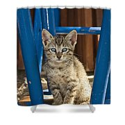 Domestic Cat Felis Catus Kitten, Germany Shower Curtain