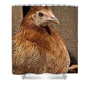 Domestic Chicken Shower Curtain