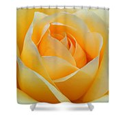 Dreamy Rose Shower Curtain