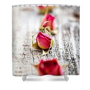 Dried Rose Buds Shower Curtain