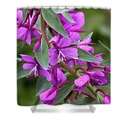 Dwarf Fireweed Shower Curtain