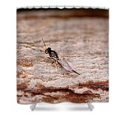 Emerald Ash Borer Parasite Shower Curtain
