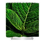 Emerging Hydrangea Leaf Shower Curtain