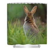European Rabbit Oryctolagus Cuniculus Shower Curtain