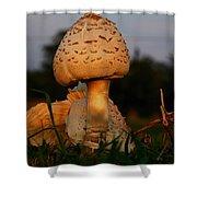 Evening Mushroom Shower Curtain