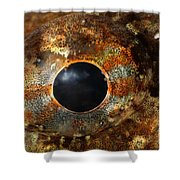 Eye Of Shorthorn Sculpin Shower Curtain