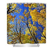 Fall Maple Trees Shower Curtain