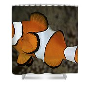 False Clownfish Shower Curtain