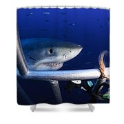 Female Great White Shark, Guadalupe Shower Curtain