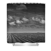 Field Furrows And Clouds In South East Texas Shower Curtain