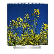 Field Of Rape In Bloom. Auvergne. France. Europe Shower Curtain
