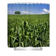 Field Of Wheat. Auvergne. France. Europe Shower Curtain
