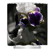 Filoli Iris Shower Curtain