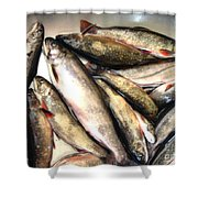 Fine Catch Of Trout Shower Curtain