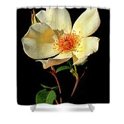 Five Petal Rose Shower Curtain