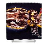 Flamboyant Cuttlefish Shower Curtain