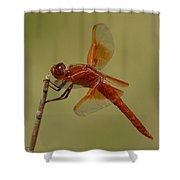 Flame Skimmer Shower Curtain