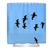 Flock Of Flying Oystercatchers Shower Curtain
