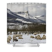 Flock Of Sheep In The Snow Shower Curtain