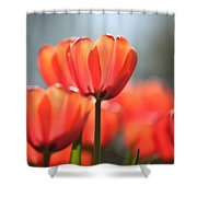 Floral 34 Shower Curtain
