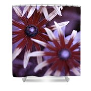 Flower Rudbeckia Fulgida In Uv Light Shower Curtain by Ted Kinsman