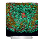 Fluorescent Sea Anemone Shower Curtain