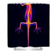 Flying Gecko X-ray Shower Curtain