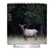 Forest Elk Shower Curtain