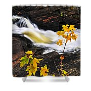 Forest River In The Fall Shower Curtain by Elena Elisseeva