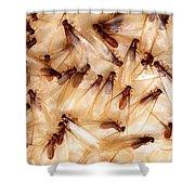 Formosan Termites Shower Curtain