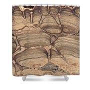 Fossil Stromatolite Shower Curtain