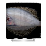 Freshwater Flounder Shower Curtain