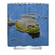Frog In Pond Shower Curtain