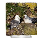 Fulmar Pair Bonding Shower Curtain