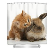 Ginger Kitten And Young Lionhead-lop Shower Curtain