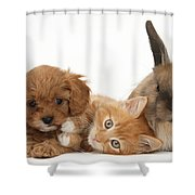 Ginger Kitten With Cavapoo Pup Shower Curtain