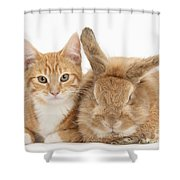 Ginger Kitten With Sandy Lionhead-cross Shower Curtain
