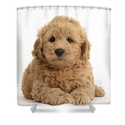 Goldendoodle Puppy Shower Curtain