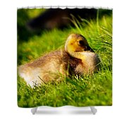 Gosling In Spring Shower Curtain