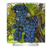 Grapes On A Vine Sutton Junction Quebec Shower Curtain