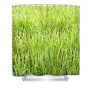 Grasses Shower Curtain