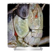 Grasshopper With Parasitic Mite Shower Curtain