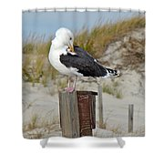 Great Black-backed Gull    Larus Marinus Shower Curtain