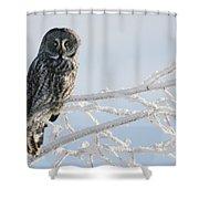 Great Grey Owl, Northern British Shower Curtain