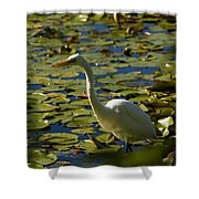 Great White Egret Perched On A Rock Shower Curtain